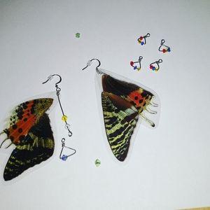 Real wing earrings